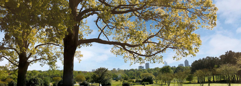 Dorothea Dix Park